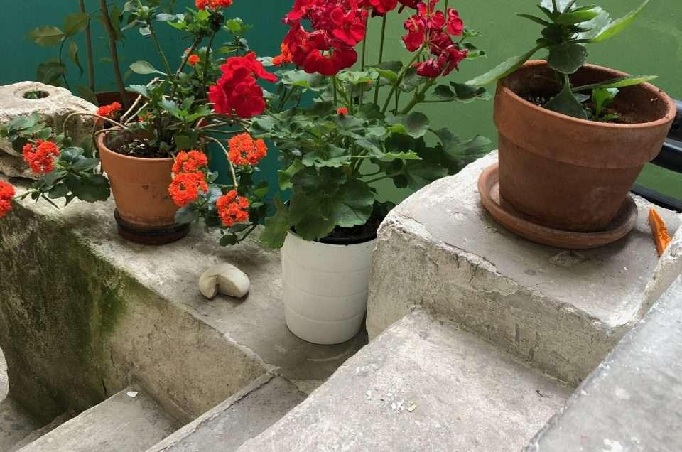 fiori e memoria in cortile su fondo verde